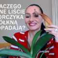 dlaczego zolkna liscie storczyka