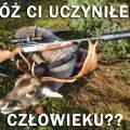 polowanie