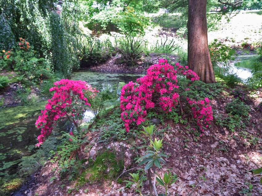 park rododendronów w Kromlau